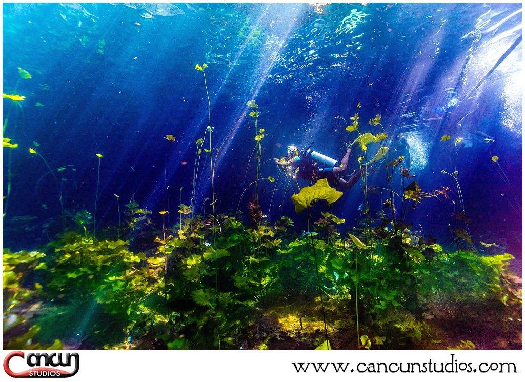 Cenote Underwater Photography